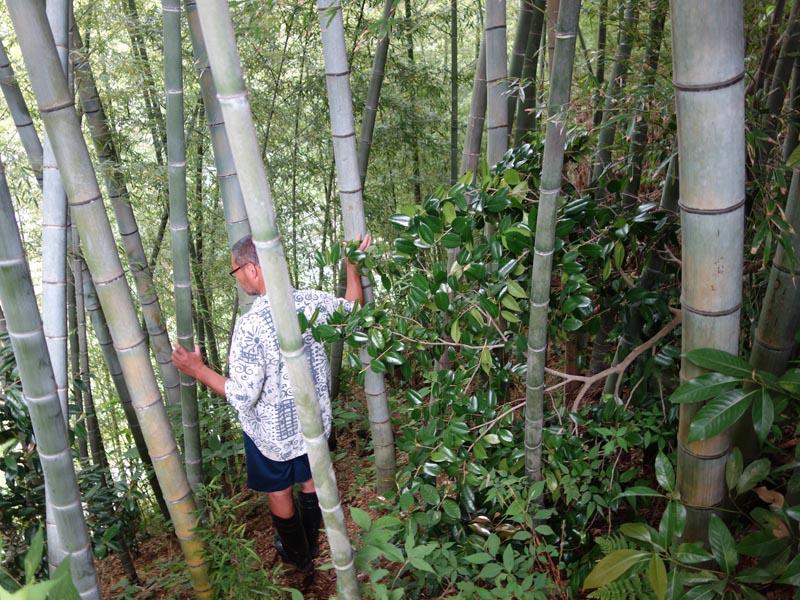 整備が必要な竹林を視察