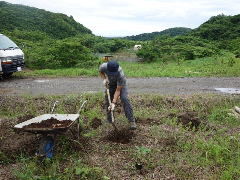 植樹準備で穴を掘ります